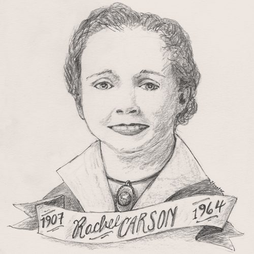 Rachel Carson by Betsy Streeter